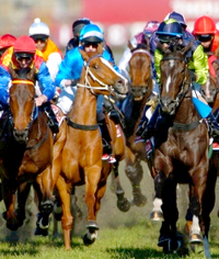 2019 Melbourne Cup Betting ~ Australian Horse Racing Bet